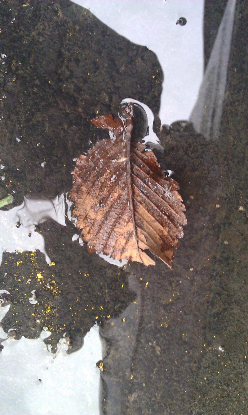 Leaf2011